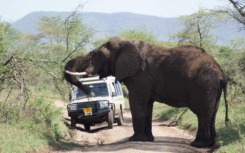 safari_afrika